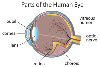 eczema-parts-of-the-eye.jpg